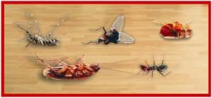 Công ty diệt côn trùng gây hại